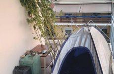 Για καλλιέργεια δενδρυλλίων κάνναβης συνελήφθησαν στα Τρίκαλα