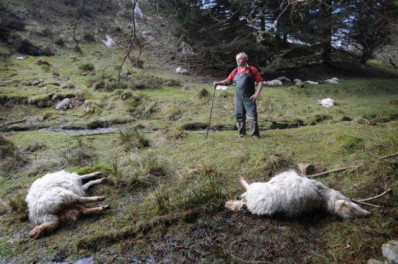 Πρόγραμμα διαχείρισης νεκρών ζώων 2016
