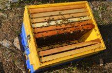Πρόγραμμα Στήριξης των Μικρών Νησιών του Αιγαίου Πελάγους στον τομέα της Μελισσοκομίας
