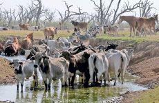 Η έλλειψη νερού απειλεί την πανίδα της Παραγουάης