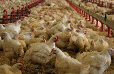 Μέτρα  για τη γρίπη των πτηνών