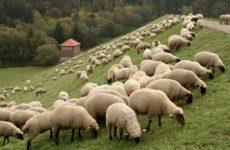 Γ.Σ. και εκλογές στον Κτηνοτροφικό  Σύλλογο   Ρήγα Φεραίου