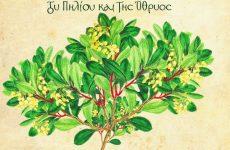 Τα βότανα του Πηλίου και της Όθρυος από τη βοτανολογική «βίβλο» Flora Graeca στο έργο 7 ζωγράφων της Μαγνησίας