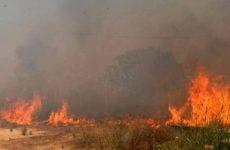Μεγάλη φωτιά στις εγκαταστάσεις του Ιππικού Ομίλου στο Σέσκλο