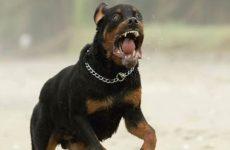 Σκύλος επιτέθηκε σε νεαρό στη Ν.Ιωνία