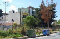 """Κοπή και αντικατάσταση """"καμμένων"""" δέντρων στη Νέα Ιωνία"""