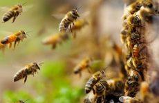 Δηλώσεις δικαιούχων Δράσης 3.2. «Οικονομική στήριξη της νομαδικής μελισσοκομίας»