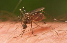 Συνεχίζεται η καταπολέμηση κουνουπιών