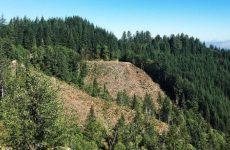 Ολοκλήρωση διαδικασίας ανάρτησης δασικών χαρτών