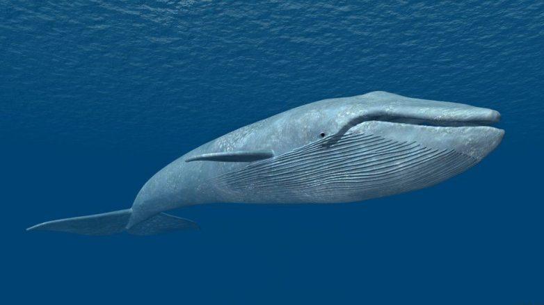 """Ενημέρωση πολιτών """"Blue Whale Challenge"""""""