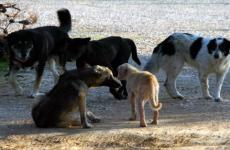 Αδέσποτο σκυλί δάγκωσε παιδί στη ΜΕΤΚΑ