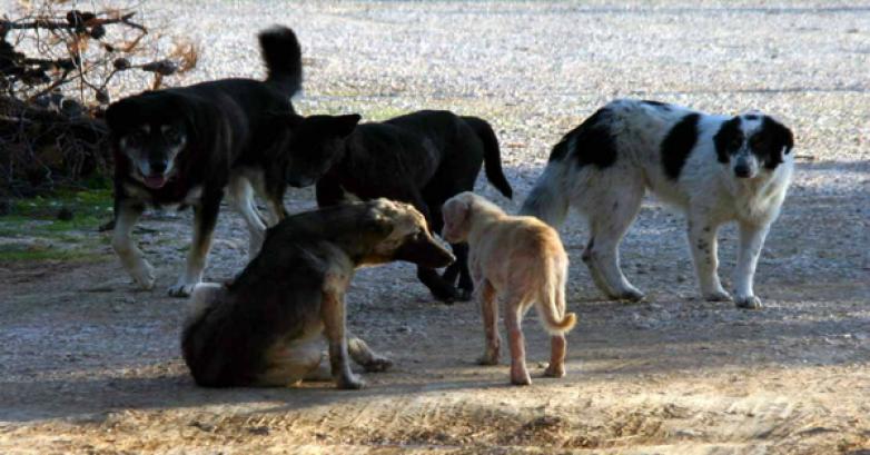 Κτήνη έριξαν φόλα σε  σκυλιά στον Αλμυρό