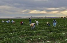 Υποχρέωση δικαιούχων του Μέτρου 11«Βιολογικές καλλιέργειες» περί υπογραφής νόμιμης σύμβασης  με Σύμβουλο κλάδου ΠΕ Γεωπόνων ή ΤΕ Τεχνολόγων Γεωπονίας
