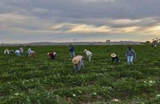 Brexit: Η ΕΕ στηρίζει τους Ευρωπαίους αγρότες σε περίπτωση αποχώρησης χωρίς συμφωνία