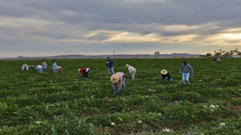 «Βιολογικές καλλιέργειες» του Προγράμματος Αγροτικής Ανάπτυξης (ΠΑΑ) 2014-2020