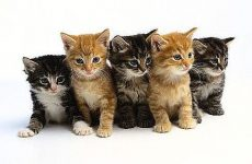 Έρευνα για θανατωμένα γατάκια στη Σκιάθο