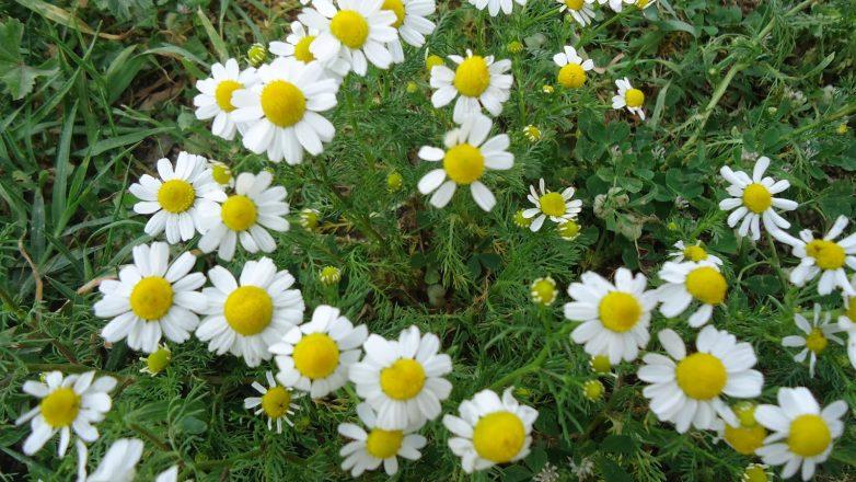 Ενδιαφέρον συνέδριο για τα αρωματικά βότανα και φυτά της Μαγνησίας