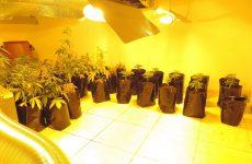 Yδροπονική καλλιέργεια κάνναβης σε οικία και φυτεία κάνναβης στην Αγιά