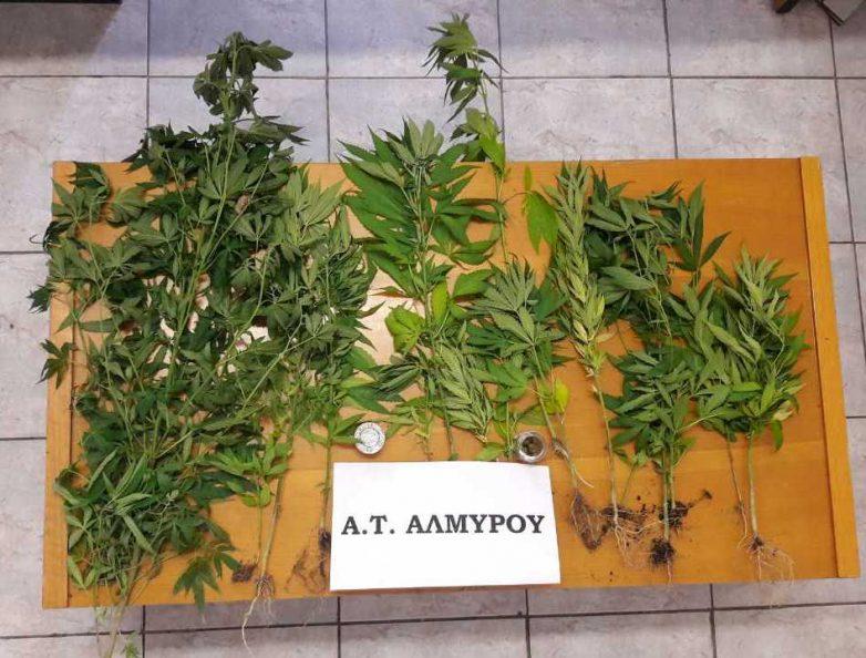 Ν. Αγχίαλος: 48χρονος καλλιεργούσε στο σπίτι του δενδρύλλια κάνναβης