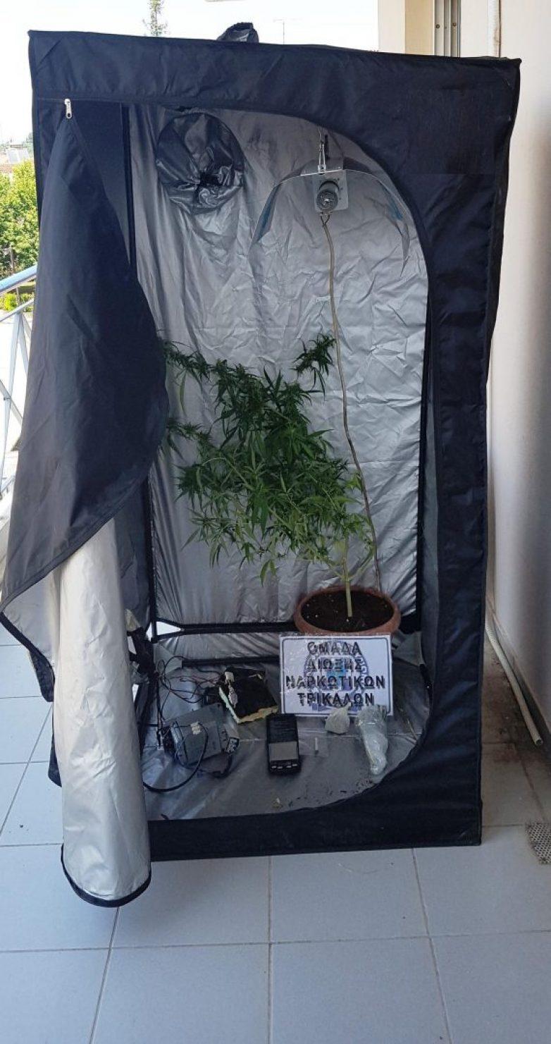 Συνελήφθη  στα Τρίκαλα με ένα δενδρύλλιο κάνναβης