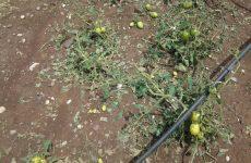 Αποζημιώσεις πληγέντων αγροτών από τον ΕΛΓΑ