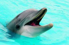 Δελφίνι βγήκε στα ρηχά σε παραλία της Σκοπέλου