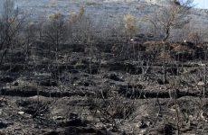 Χανιά: Ολονύκτια επιχείρηση για την κατάσβεση πυρκαγιάς που κατέκαψε 2300 στρέμματα