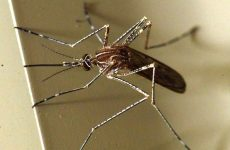 Σε εξέλιξη η εφαρμογή του προγράμματος καταπολέμησης κουνουπιών