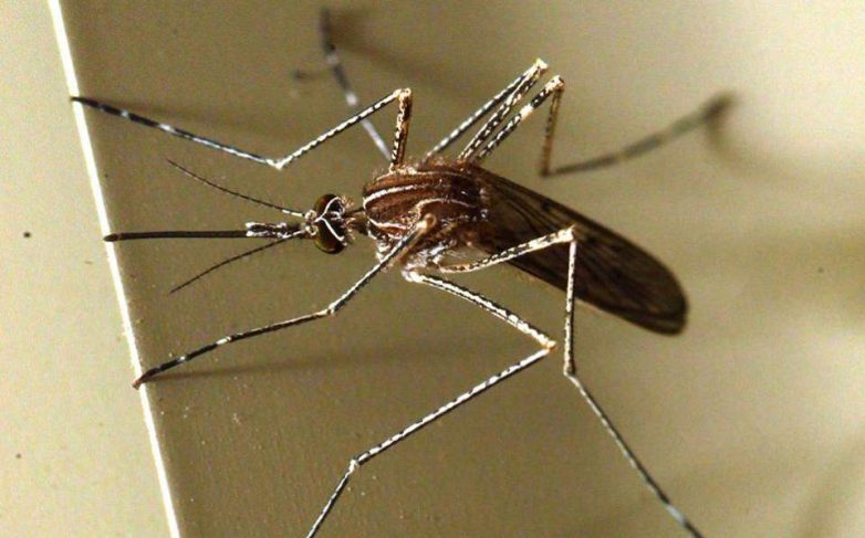 Πρόγραμμα καταπολέμησης κουνουπιών το Νοέμβριο