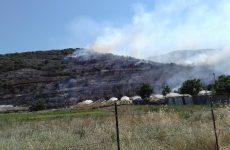 Φωτιά σε ξερά χόρτα κοντά στο Σέσκλο