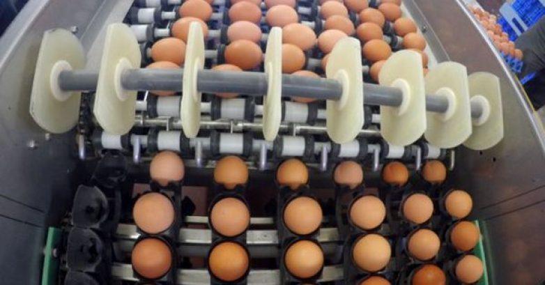 «Πόλεμος» μεταξύ Ολλανδίας και Βελγίου για τα μολυσμένα αυγά