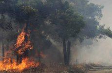 Μεγάλη πυρκαγιά βρίσκεται σε εξέλιξη στα Διάσελα Ηλείας