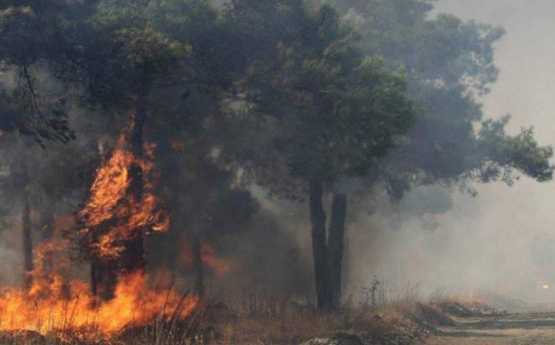 Πυρκαγιά σε εξέλιξη στην Ηλεία