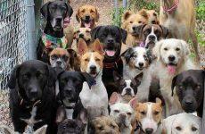 Mαζικές θανατώσεις αδέσποτων και δεσποζόμενων σκύλων στο Δήμο Ρ. Φεραίου