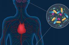 Πώς τα εντερικά βακτήρια προκαλούν άγχος
