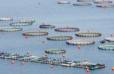 Πρόγραμμα ενίσχυσης για επενδυτικά σχέδια στην υδατοκαλλιέργεια