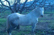 Το «1ο Τουρνουά Ανάπτυξης Ιππασίας» στην Άνω Σπαρτιά Σέσκλου