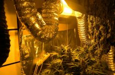 Eργαστήριο υδροπονικής καλλιέργειας κάνναβης σε διαμέρισμα  στη Λάρισα