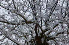 Επιδείνωση του καιρού – Βροχές στα πεδινά και χιόνια στα ορεινά
