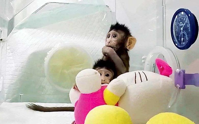 Κινέζοι κλωνοποίησαν μαϊμούδες