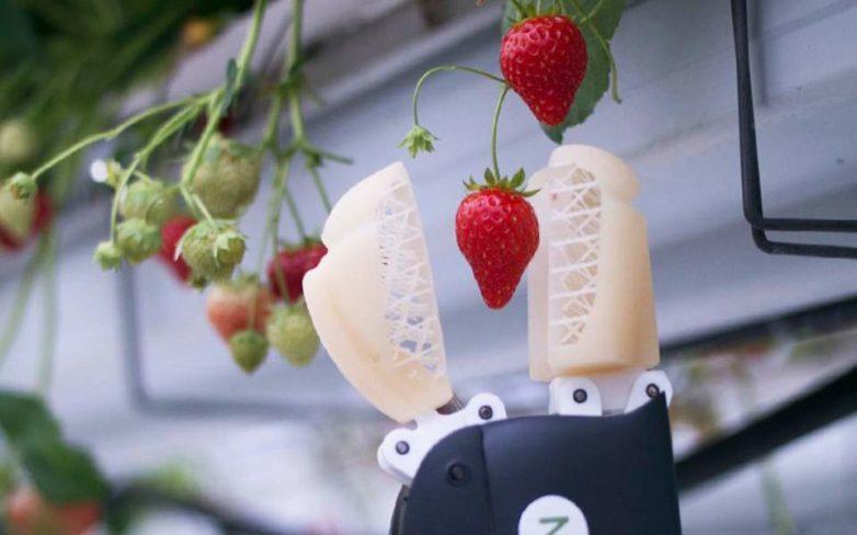 Ρομπότ για τη συγκομιδή φράουλας