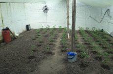 Εξοπλισμένο εργαστήριο υδροπονικής καλλιέργειας κάνναβης στα Τρίκαλα