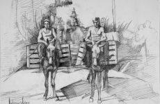 Αγροτικός Συνεταιρισμός Ζαγοράς Πηλίου, 1916-2016
