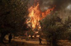 Κύπρος: Πυρκαγιά μαίνεται στο κρατικό δάσος της Πάφου
