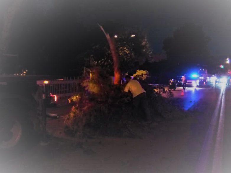 Κλάδεψαν πεύκο στην Παναγία Τρύπα στη Γορίτσα