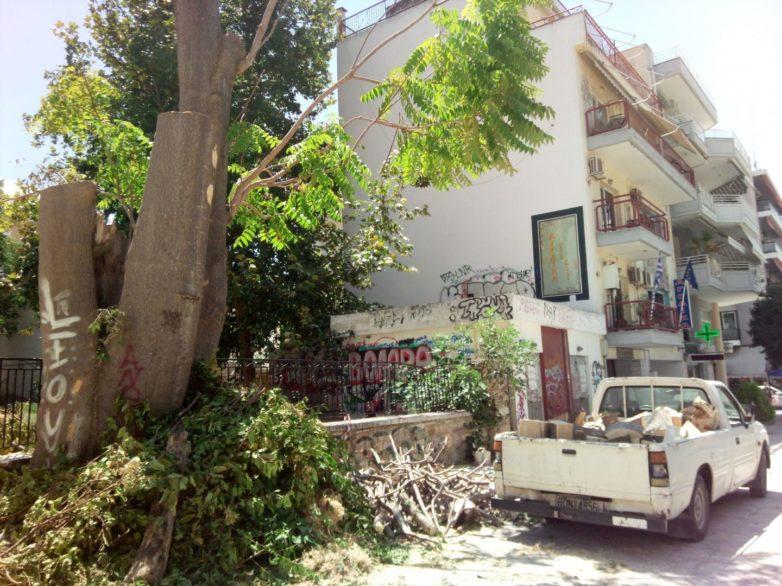 Δέντρο πηγή δροσιάς στην Κασσαβέτη «πετσόκοψε» εργολάβος