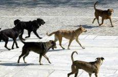 Κατασκευή καταφυγίου αδέσποτων ζώων στον Δήμο Ρ. Φεραίου