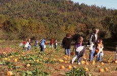 «Ανοίγει» ο δρόμος για ανάπτυξη του αγροτουρισμού στην Ελλάδα