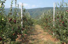 Δράσεις προστασίας των καλλιεργειών από φυσικά φαινόμενα