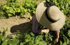 Η Ελληνίδα Αγρότισσα και οι πολιτικές για την ενίσχυση της θέσης της στην ύπαιθρο